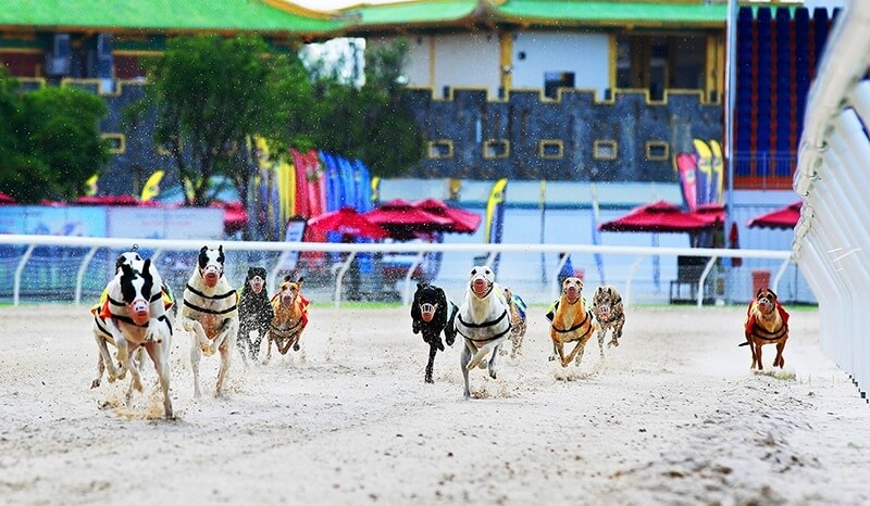 Có các giải đua chó được tổ chức với quy mô lớn nhỏ khác nhau