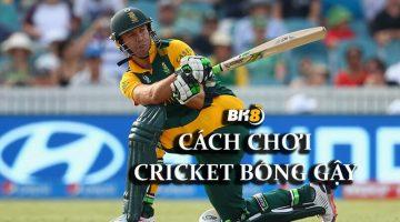 Cricket Bóng gậy là gì