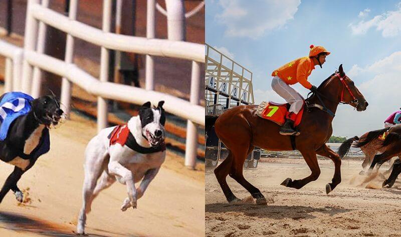 T7 Racing là sự kết hợp của hai môn đua ngựa và đua chó